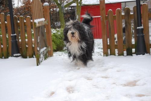 Aiyana im Schnee!