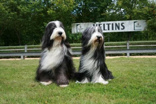 Conner the Duke und Sunpoint Topas - ein schönes Paar!!!