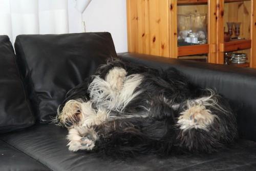 27_5_couch_bildgrose-andern