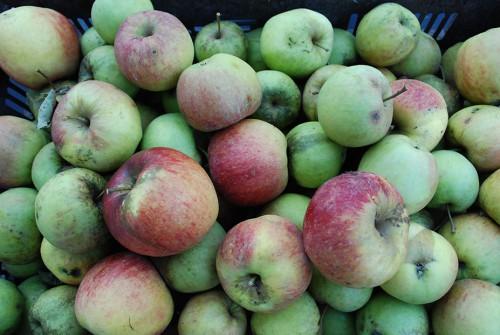 Bioäpfel von der Teufelsbande!