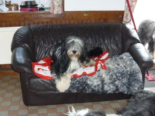 Dirty auf der Hundecouch!
