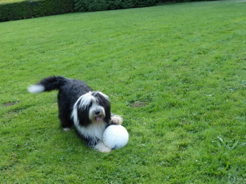 Chilli spielt Ball
