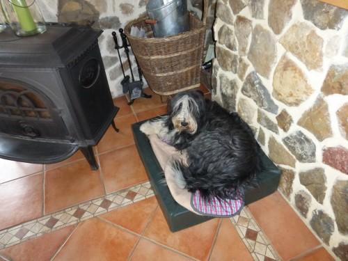 Mexx im Hundebett
