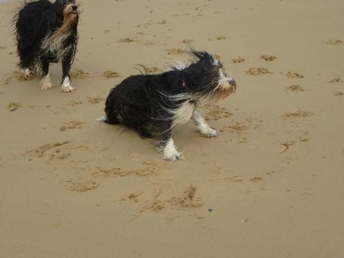 im Sand!