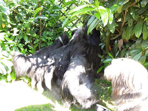 Beardie-TV, Durchblick zur Hundepension!