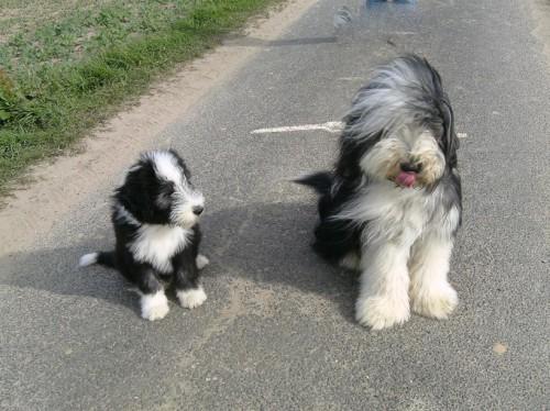 mit seinem Bruder Cosmo