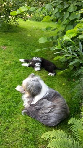 Timmy im Garten mit
