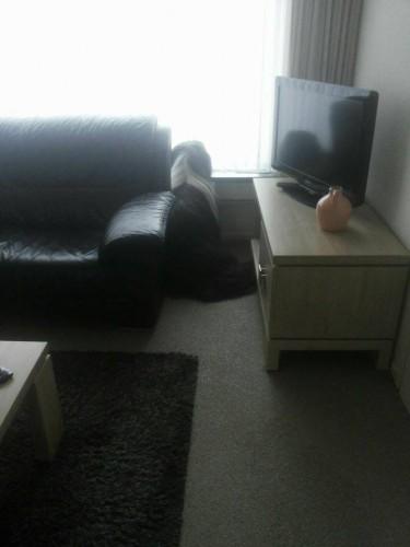Shifu wartet heute schon auf Gipsy