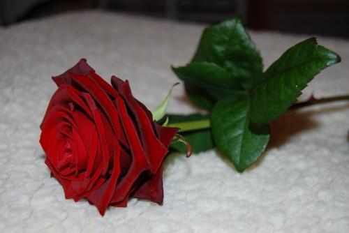 abschied_mexx_rose